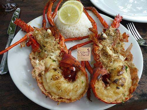 Crow's Nest lobster