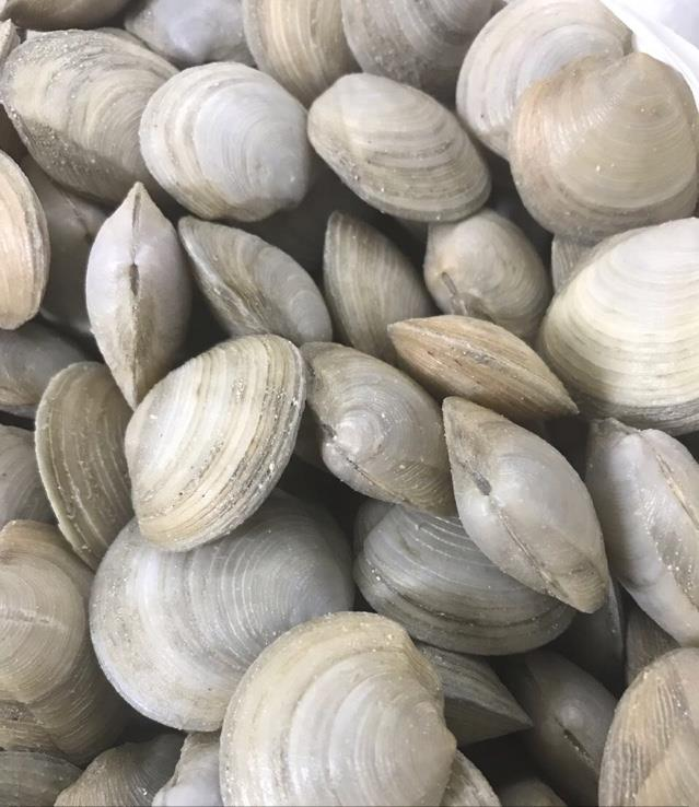 Jacqui Os fresh clams