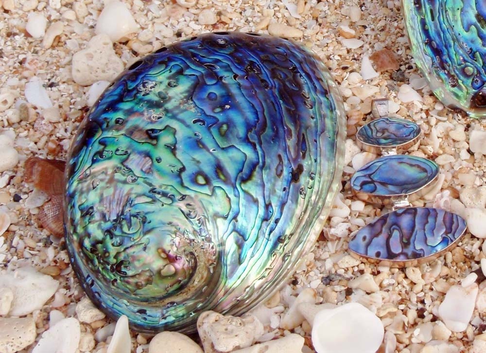 Silver Chelles abalone shell