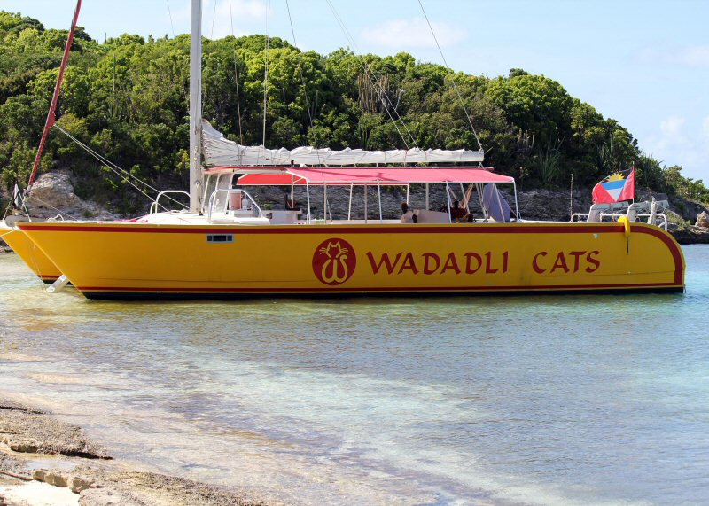 Wadadli Cats on the beach