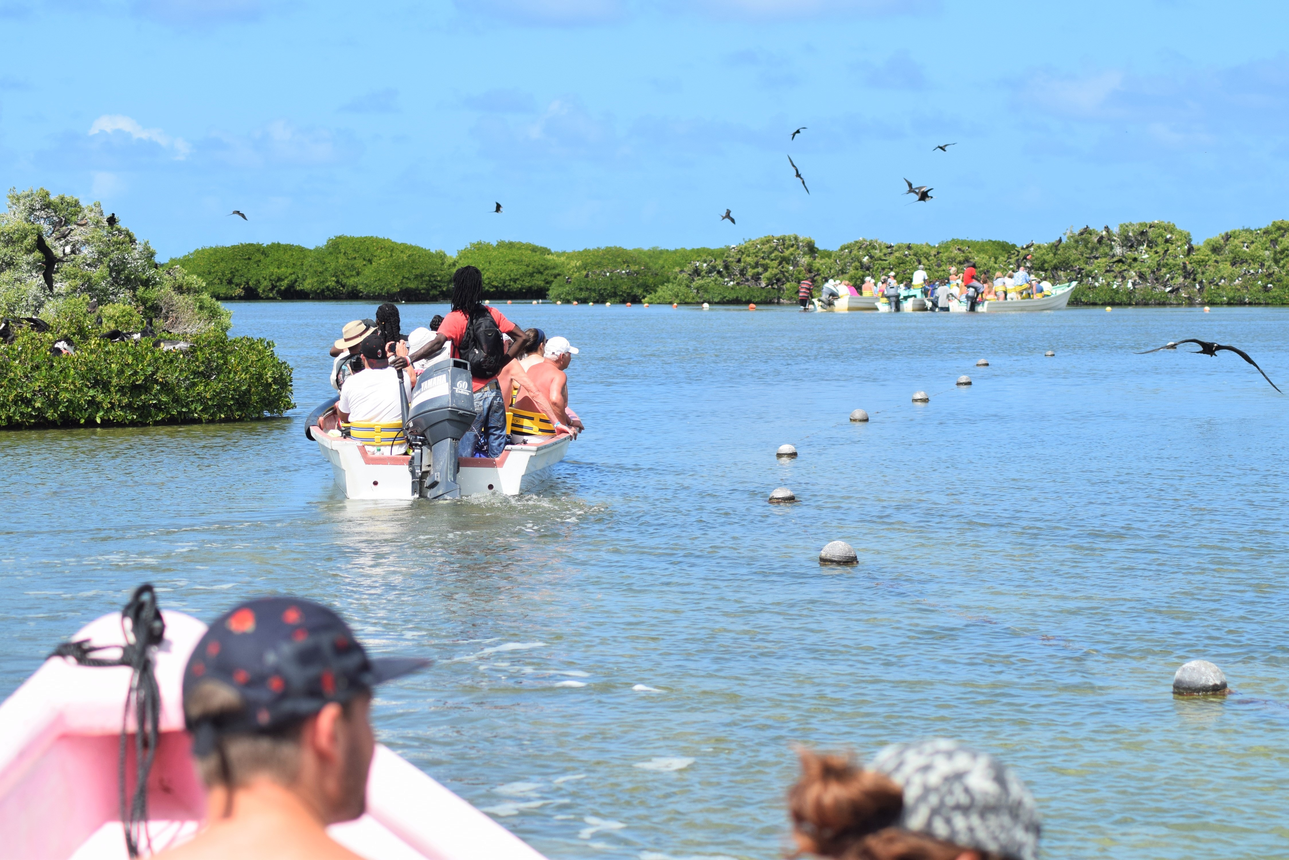 barbuda-express-frigate-bird-sactuary-tour
